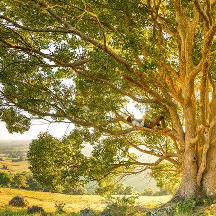 tree-beautiful-landscape-PEP-Inspire-Inc-sml